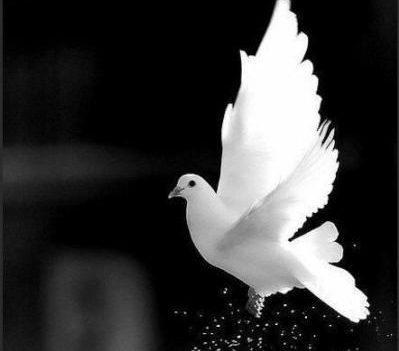 کبوتر خیالم رفت سر بوم یارم محمد مولایی